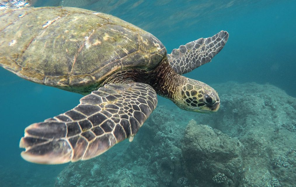 De onderwaterwereld fotograferen.