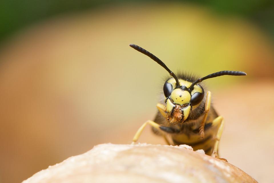Een bijenbekje kopen: weg met ongenode gasten